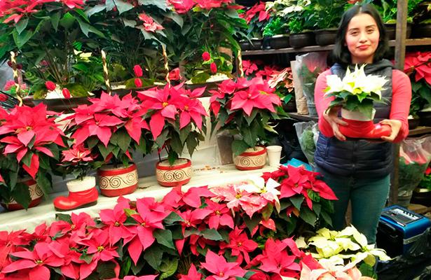 Ofertan plantas de nochebuena en mercados de xochimilco for Viveros en queretaro