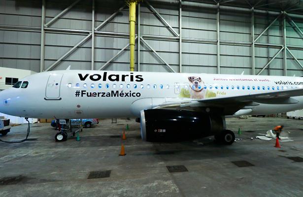 Volaris homenajea a la perrita 'Frida'