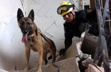 Donan a Policía Federal, cinco perros de rescate