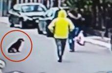 Valiente perro callejero evita que joven sea asaltada