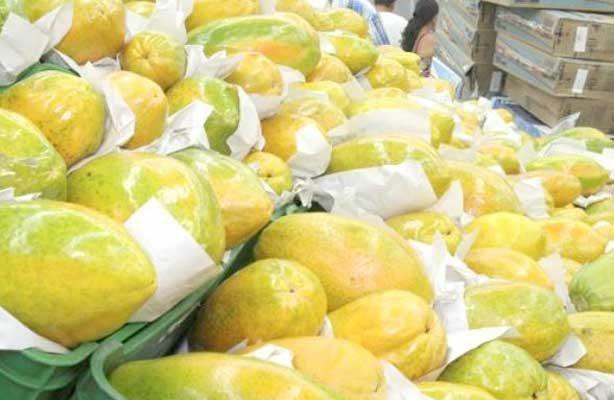 Descubren cargamento de papayas acompañado de marihuana en Hidalgo