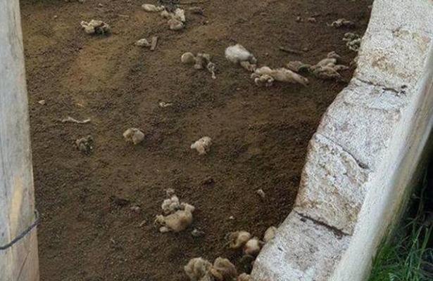 Genera temor y alarma causa puma suelto en Toluca