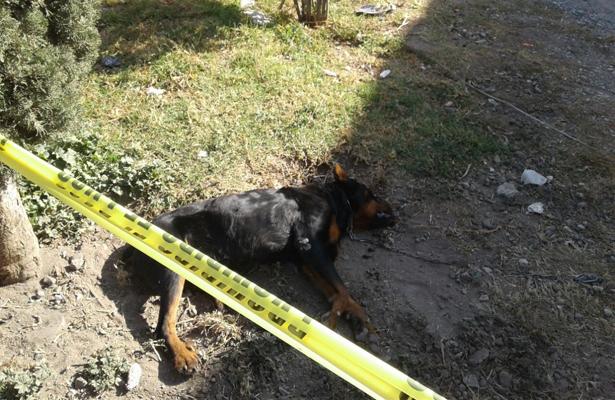 Mata un perro y la ley no lo puede castigar por no estar tipificado