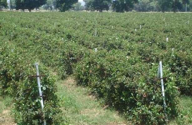 Fomentarán cultura de aseguramiento de cultivos