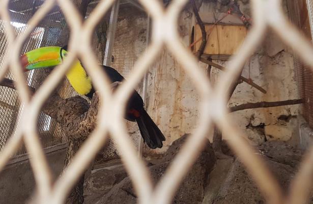 Asegura Profepa ocho ejemplares de vida silvestre en Jalisco