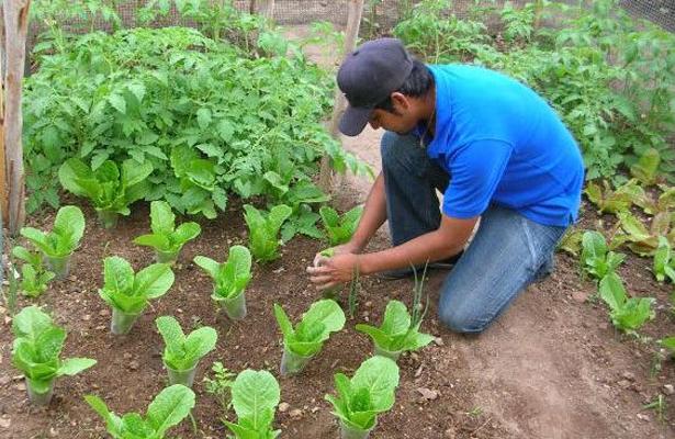Más de un millón de pesos invierte Sederec en la producción de hortalizas