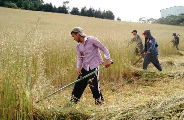 Recupera CDMX más de 400 mil metros cuadrados de suelos ociosos en zona rural