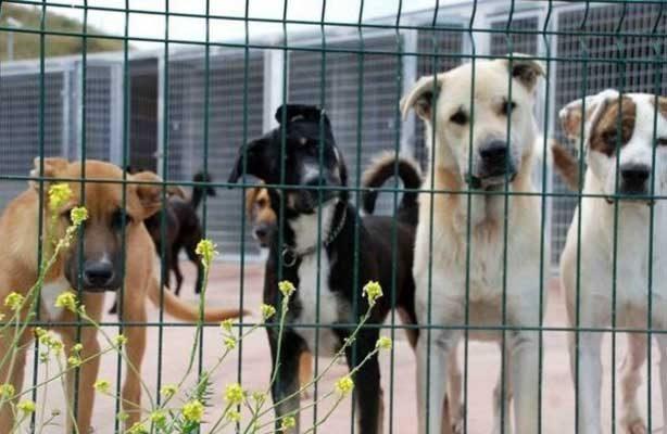 Complace sentencia al agresor de perro en Sonora