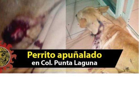 Perro es apuñalado en Reynosa