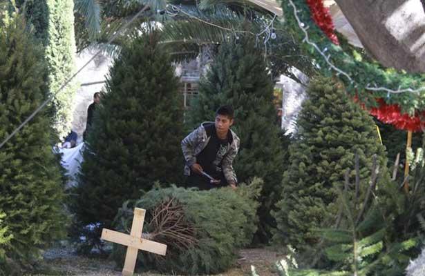 Dale una nueva vida a tu árbol de navidad
