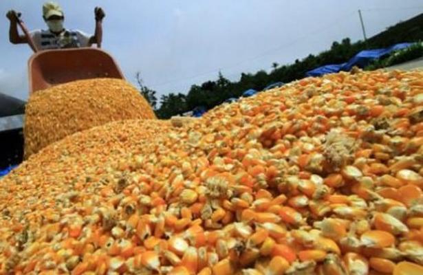 Comprará Diconsa 30 mil toneladas de maíz al Edoméx