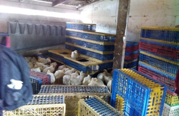 Fiscalía estatal recupera mercancía robada, en Toluca