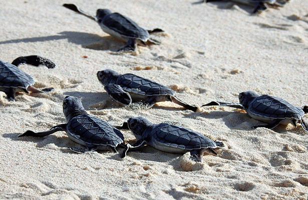 Rescatan tortugas marinas aturdidas por bajas temperaturas en Florida