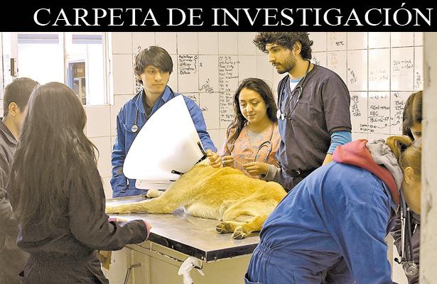 El secuestro de mascotas, una nueva modalidad de extorsión