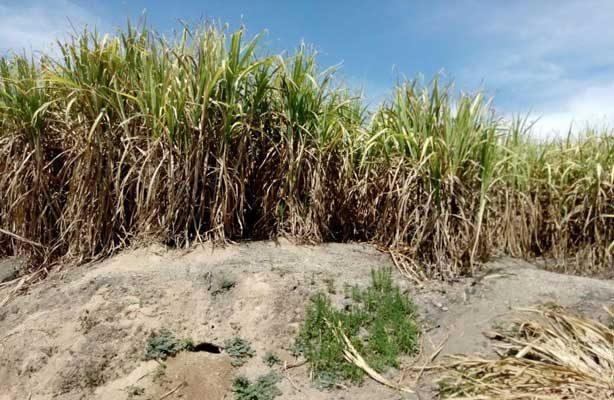 Encuentran la séptima fosa clandestina en Nayarit