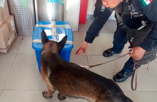 Binomio canino de PF detecta cachorro de tigre de bengala enviado por paquetería en Jalisco