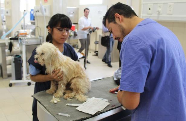 Más de 80 mil mascotas han sido atendidas en Hospital Veterinario