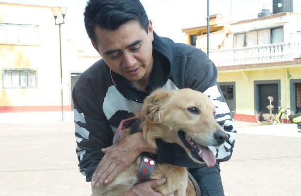 Inicia campaña gratuita de vacunación antirrábica para perros y gatos
