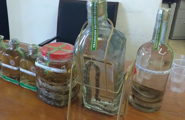 Asegura PROFEPA reptiles en botellas de mezcal en Oaxaca