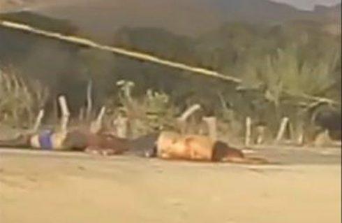 Localizan los cuerpos de dos ejecutados en el Istmo