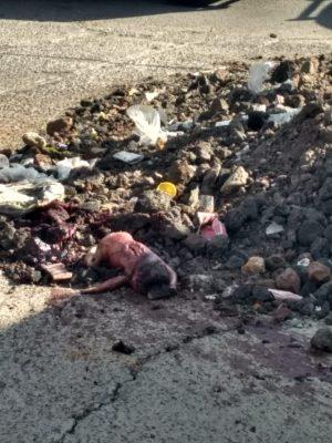 Encuentran feto en estado de descomposición en Chalco