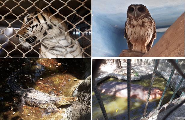 Asegura Profepa 54 ejemplares de vida silvestre en Puerto Vallarta