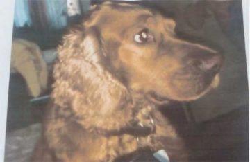La familia de este can pide ayuda para hallarlo