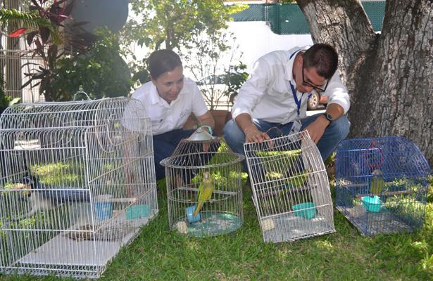 Libera Profepa 4 aves entregadas voluntariamente por un particular, en Colima