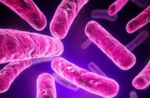 Buscan alternativa menos tóxica para el tratamiento de la amibiasis: Cinvestav