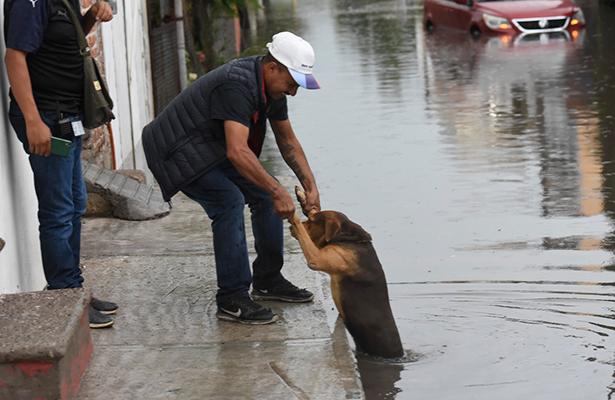 Provoca aguacero caos y daños en Irapuato