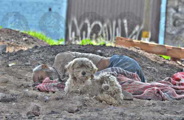 Fiel perro acompañó a su dueño hasta la muerte