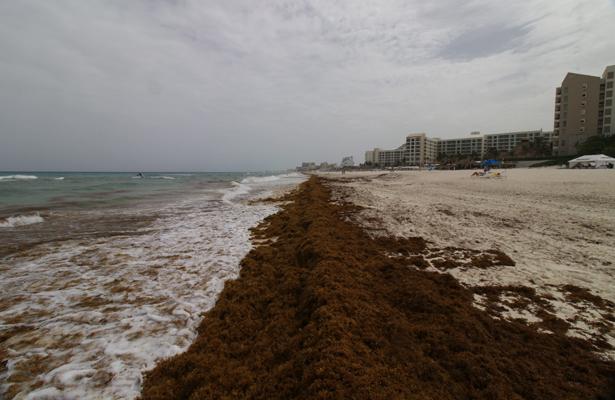 Playas del país aptas para uso recreativo las: Cofepris