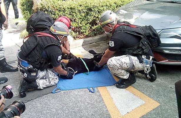 """Realiza la Brigada Animal """"Simulacro de Evacuación de Sismo"""