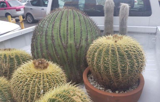 Aseguran PROFEPA plantas protegidas en Xochimilco