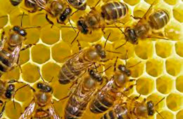 Matan a cientos de miles de abejas por fumigación