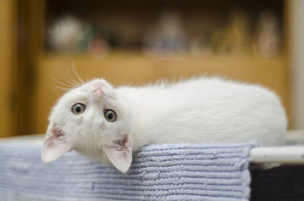 Día Internacional el Gato, una festividad con tres fechas para celebrar