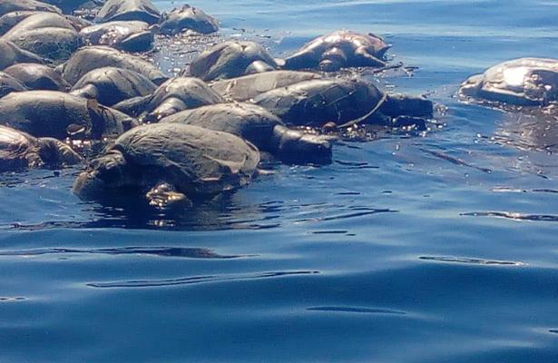 Responsabilidad de pescadores locales, muerte de tortugas
