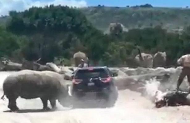 ¡Qué miedo! Rinoceronte embiste a turistas en Puebla (VIDEO)
