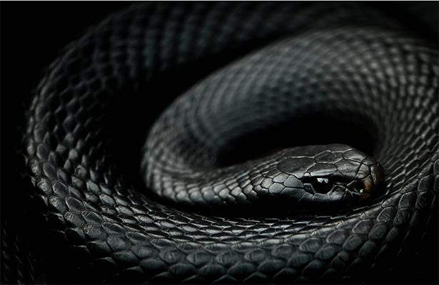 Premian antiveneno contra mordeduras de serpiente, creado en la UNAM