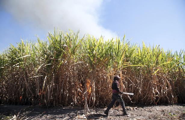 Preocupa a industria azucarera campaña en contra del azúcar de caña