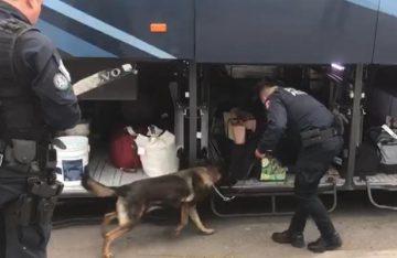 Hallan 19 kilos de cocaína escondidos en autobús de la Central del Norte CDMX