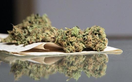 Aprueba Reino Unido el uso de marihuana con fines medicinales