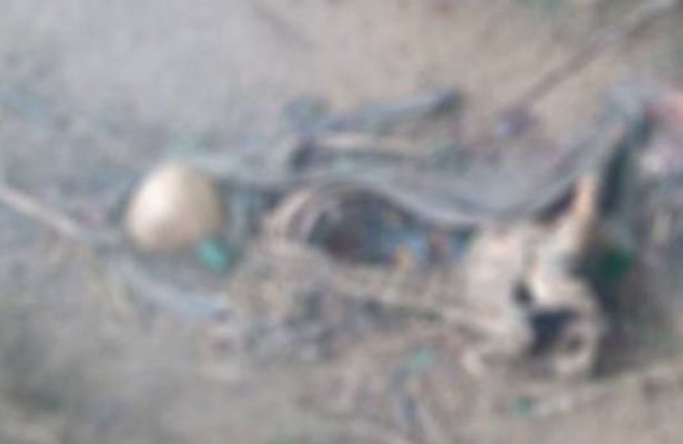 Campesino halla osamenta humana en Veracruz