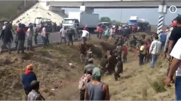 Saquean ganado en Veracruz [VIDEO]