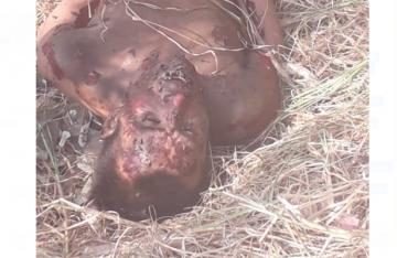 Hallan cadáver putrefacto y con marcas de tortura en Cuautepec