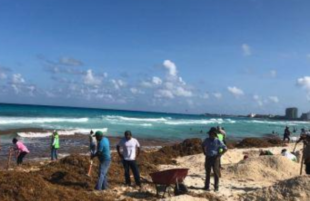 Unen esfuerzos para enfrentar la contamincación por sargazo en Quintana Roo