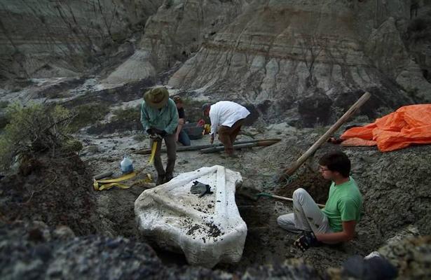 Descubren en Canadá al Tyrannosaurus Rex más grande del mundo