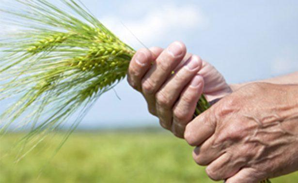 Financiera rural estima aumento de 69 mil mdp en créditos agropecuarios
