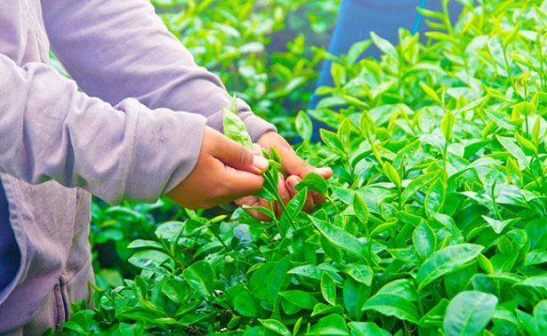 Caen las exportaciones agrícolas de  EU a México apuntó el diario The Wall Street Journal