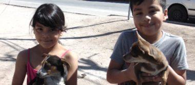 Arranca Semana Nacional de Vacunación Antirrábica Canina y Felina